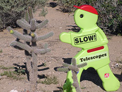 Timmy explores the cactus at Petroglyph National Monument