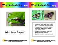 What animals see sample card